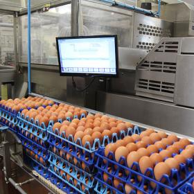 L'Avicole de l'Ouest opens its doors to Label Rouge and organic eggs producers
